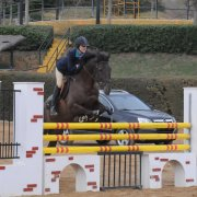 foto hipica caballos 2
